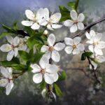 flower-4922518_640.jpg